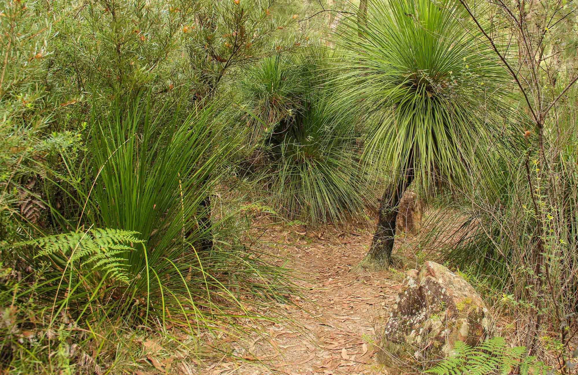 Grass Tree Circuit - SA Accommodation