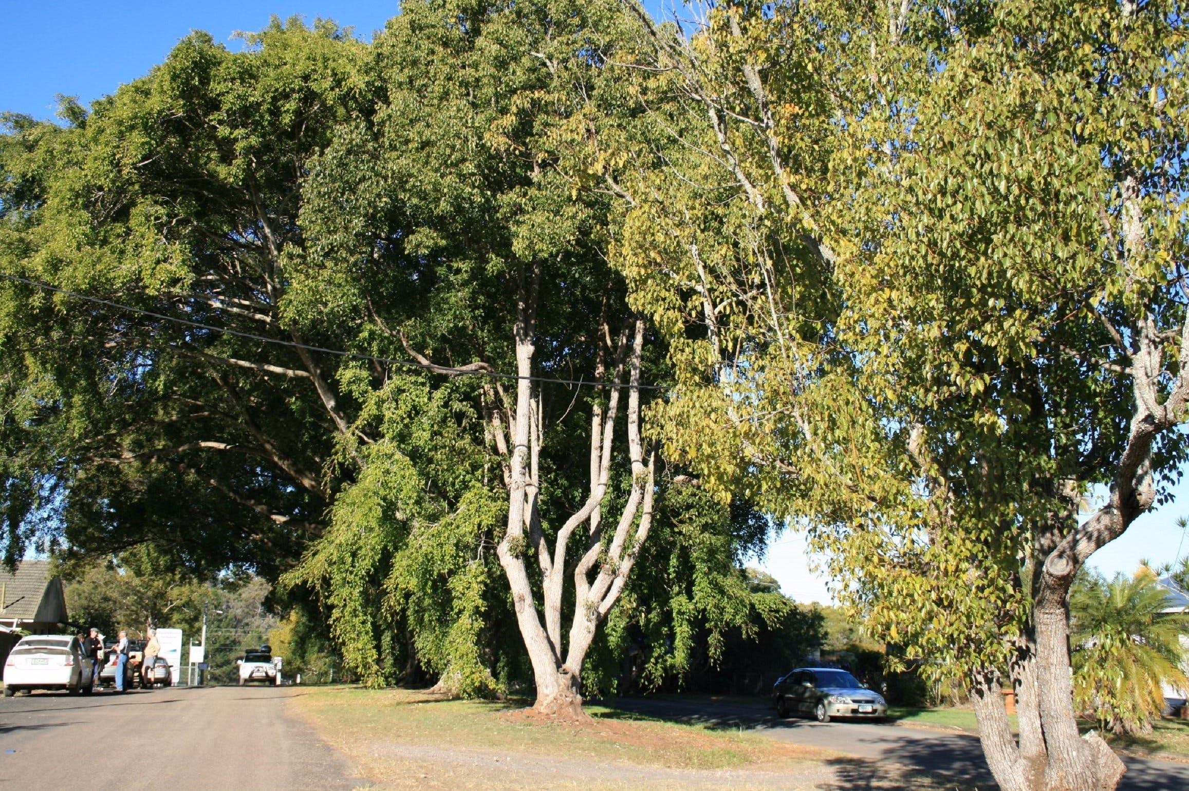 Anzac Avenue Memorial Trees Beerburrum - SA Accommodation
