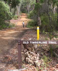 Old Timberline and Sidings Rail Trails - SA Accommodation