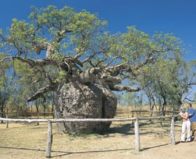 Boab Prison Tree - SA Accommodation